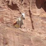 DonkeyCliff